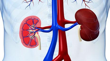 Acute Renal Disease